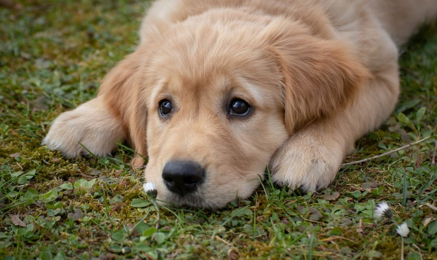 Symptoms of kennel cough in dogs | causes | diagnosis | Treatment