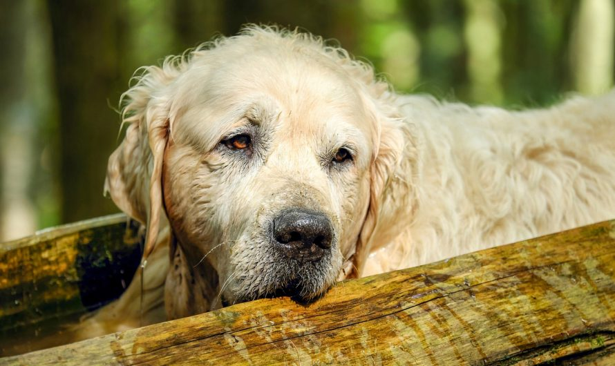 Symptoms of diabetes in dogs | Causes | Diagnosis | Treatment