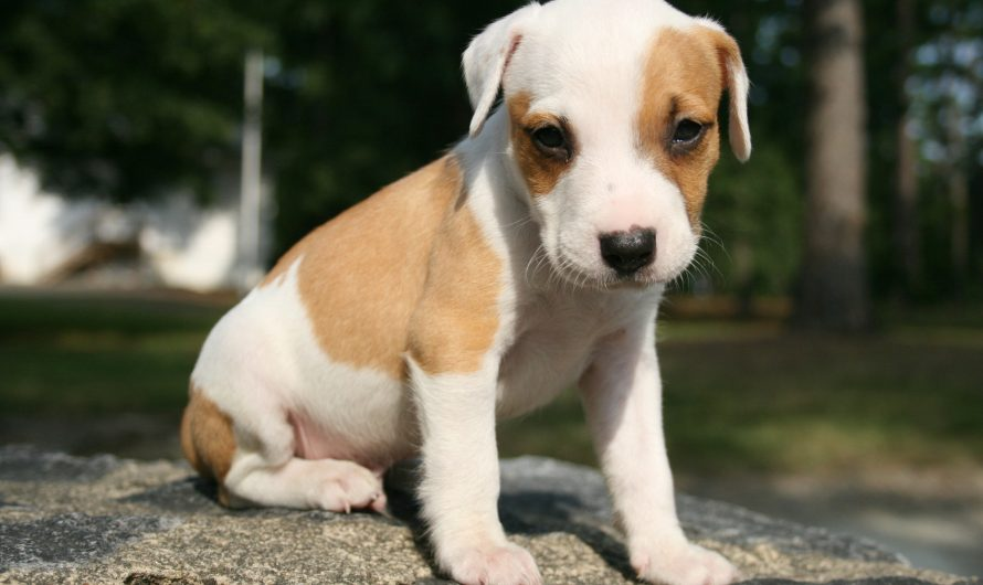 Vomiting dog white foam | Causes | Treatment