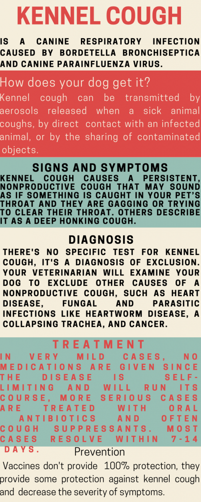 kennel cough infographic